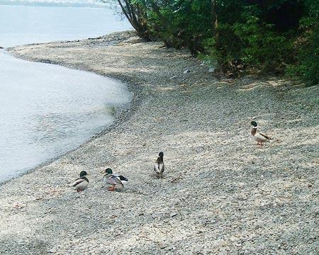 Strand in Zenna, Lago Maggiore
