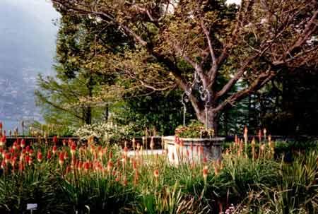Der blühende Pflanzengarten auf der Brissago Insel nähe Ronco. Verbringen Sie einen sonnigen Tag auf diesen Inseln, geniessen den herrlichen Blumenduft und den atemberaubenden Ausblick auf den lago maggiore und die alpen