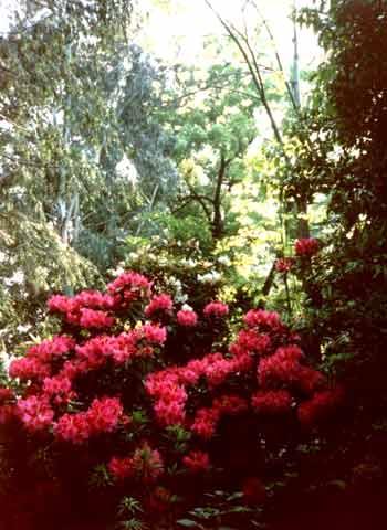 Phantastische Farben und Blumen überall auf den Brissago-Inseln
