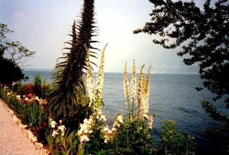 Exotische Gewächse im Blumenparadies Brissago