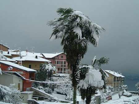 Schneebedeckte Palmen sieht man nicht allzu oft...