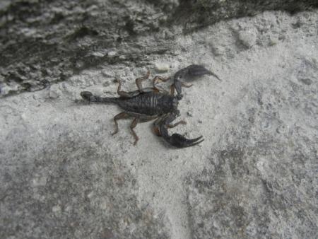 Skorpione Lago Maggiore